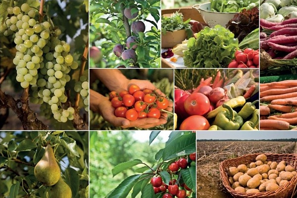 Reklamní kampaň: Ovoce azelenina vBIO kvalitě